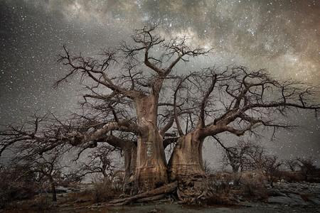 'Diamond Nights', de Beth Moon, alucinantes paisajes de árboles centenarios bajo un imponente cielo estrellado