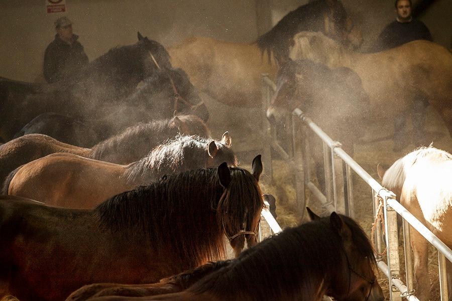 Las ferias de ganado