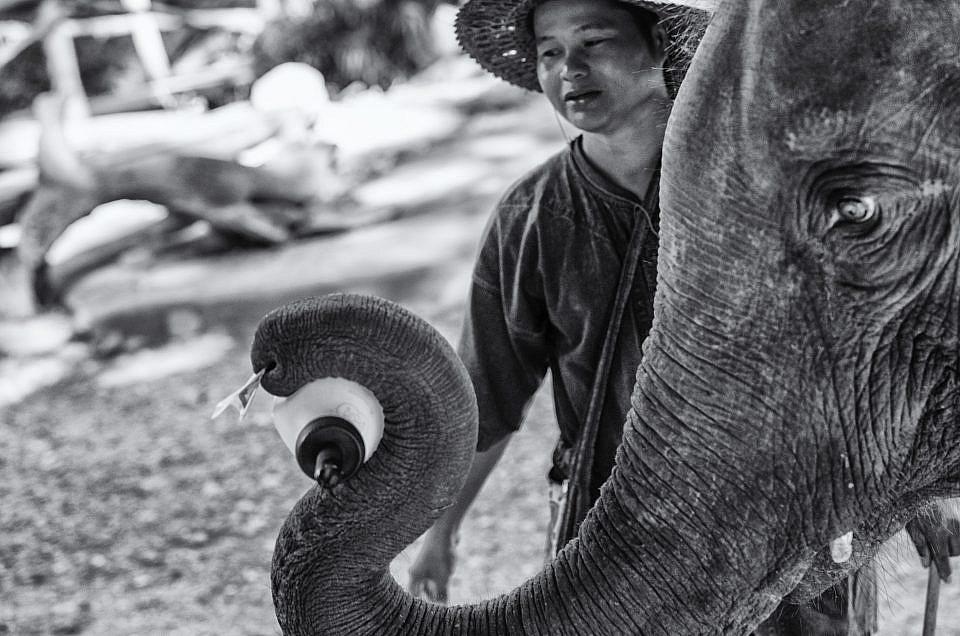 El campamento  de elefantes